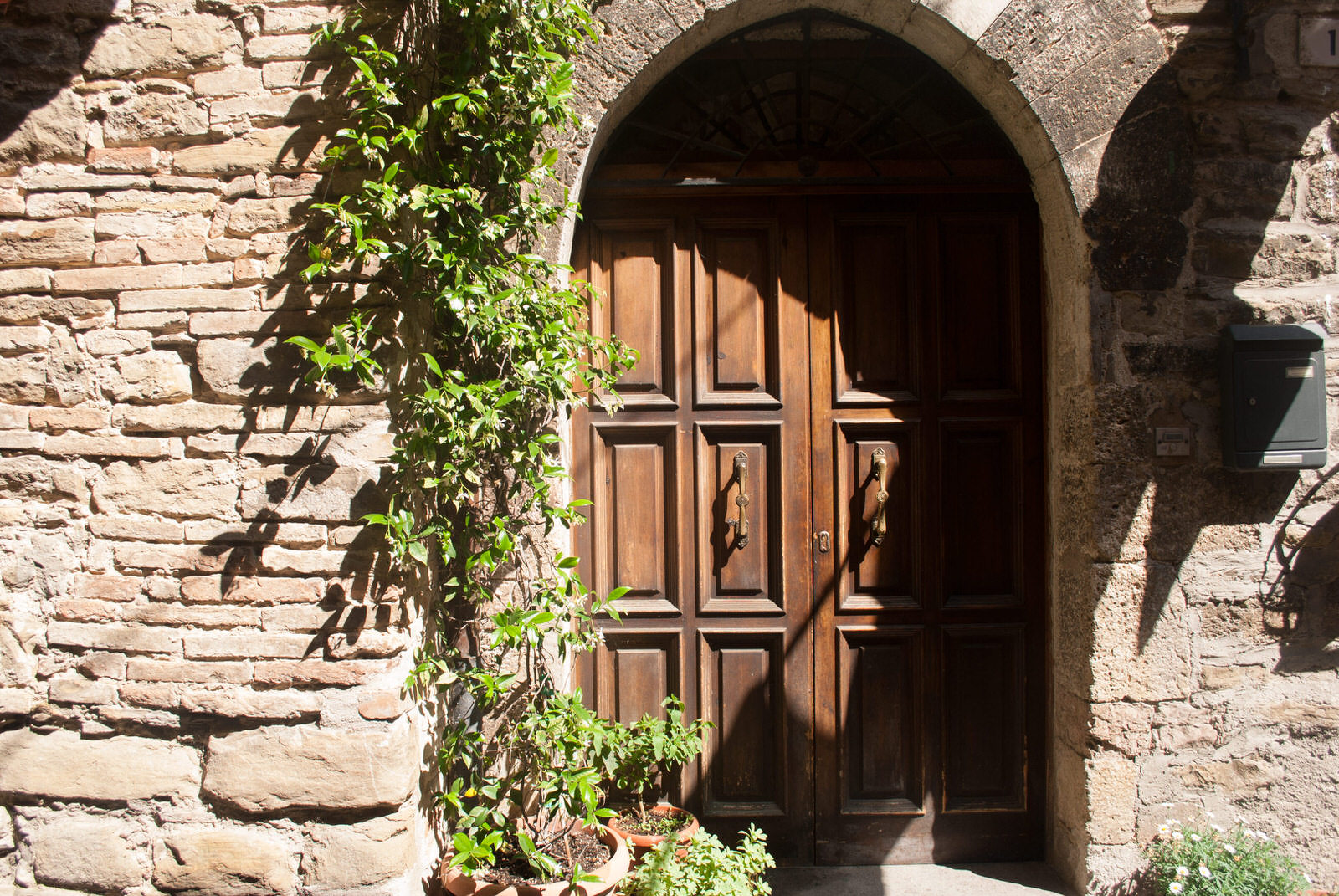 A vine grows along a door in Bevagna